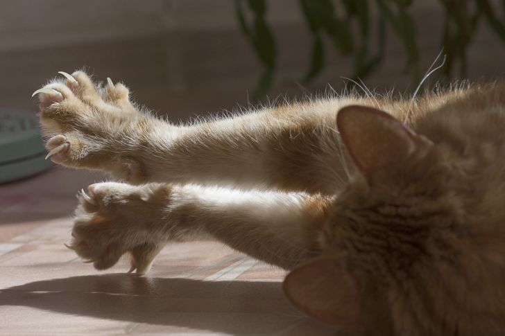 A cat stretches its paws and claws