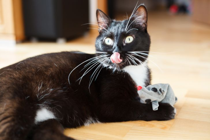 Tuxedo cat plays with a mouse toy