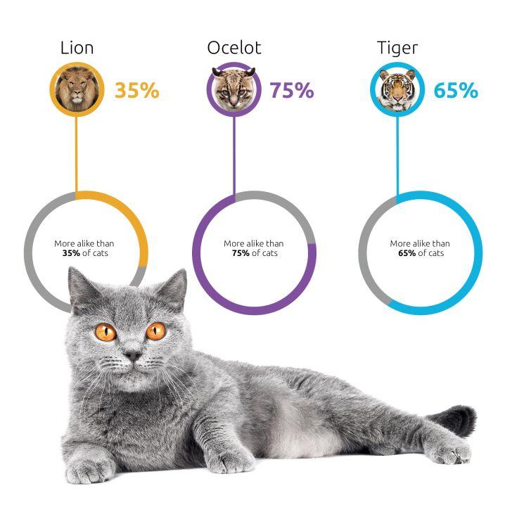 A cat DNA test result