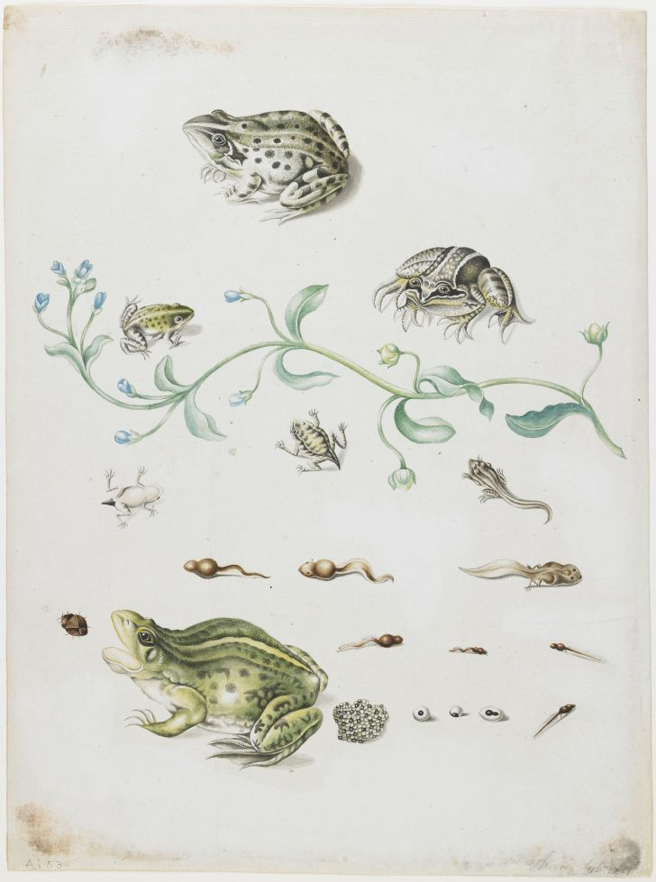 A painting of frogs
