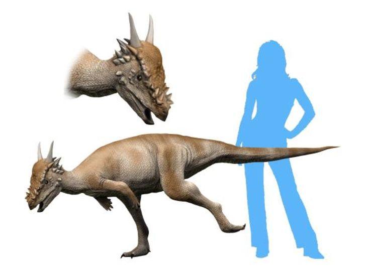 Life reconstruction of Stygimoloch spinifer