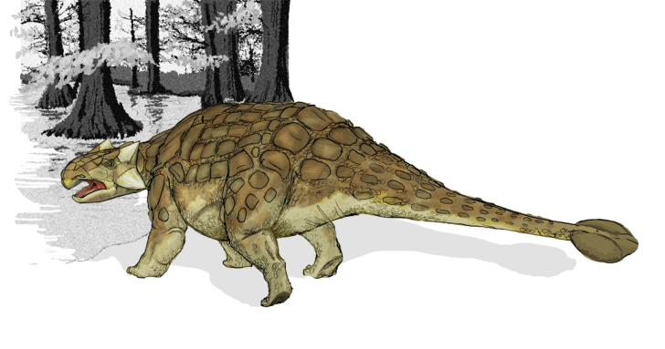Depiction of Ankylosaurus displaying its tail club