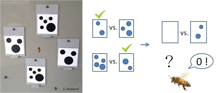 Left: A photo of a bee choosing between images with black dots on them. Right: an illustration of a bee choosing the image with fewer dots