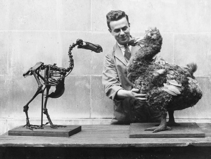 A man standing with a Dodo skeleton and a reconstructed model of the extinct bird