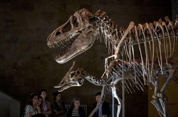 A Tyrannosaurus Bataar skeleton in Ulan Bator