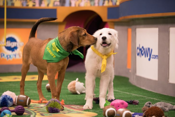 Barry and Olympia compete in Puppy Bowl XIV