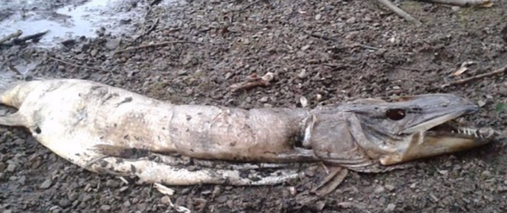 A fanged sea creature found in England