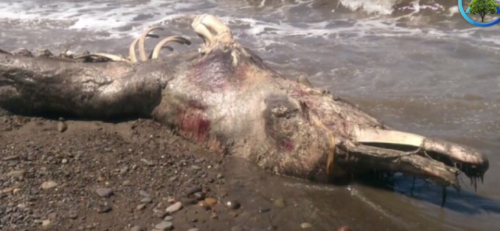 The corpse that washed up on Sakhalin Island